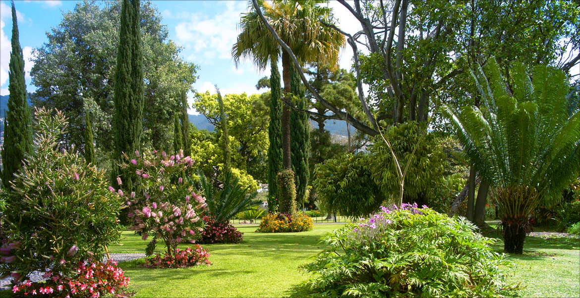 Our lush botanical gardens on madeira island for Photos de jardins paysagers